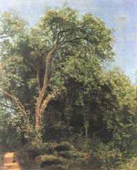 Дерево в парке Гиджи (А.А. Иванов)